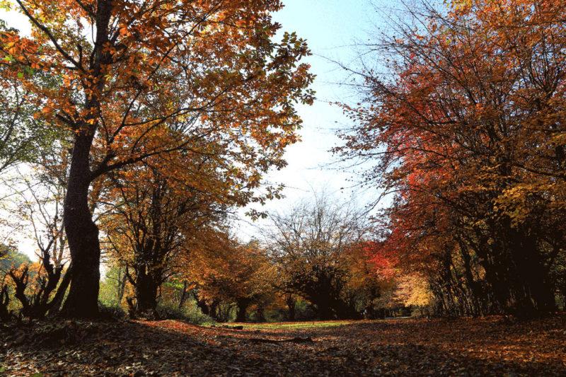 پاییز جنگلهای مازندران